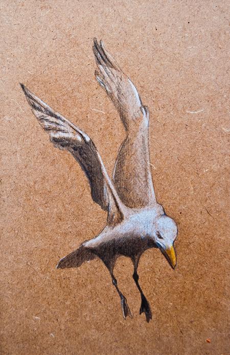 Gaviota / Seagull - Grafito / graphite -© Lucía Gómez Serra