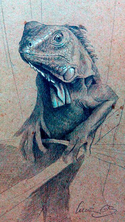 Iguana verde / Green Iguana / Iguana iguana - Grafito / graphite - 24 x 38 cm - © Lucía Gómez Serra