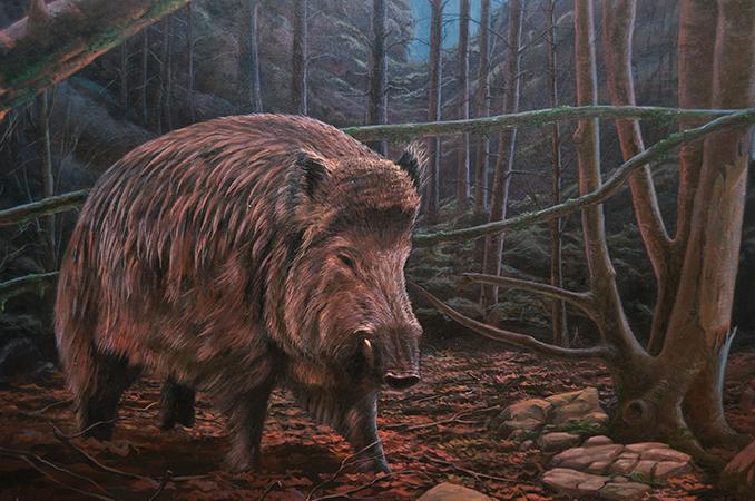 Jabalí / Boar / Sus scrofa - Óleo / Oil painting - © Lucía Gómez Serra