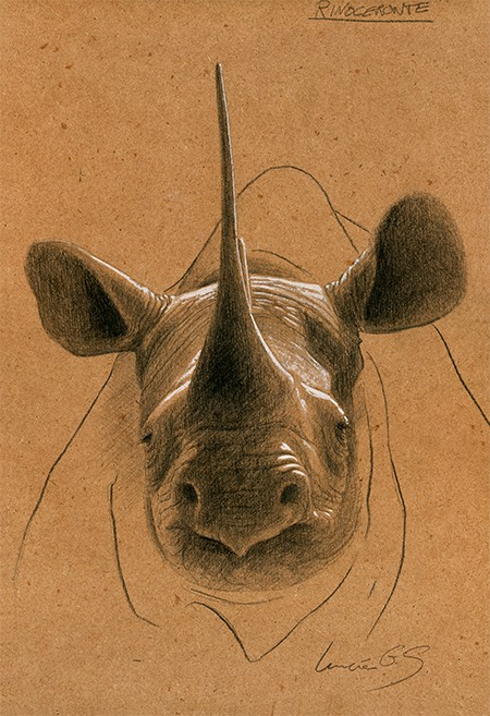 Rinoceronte blanco / White Rhinoceros / Ceratotherium simum - Grafito / graphite - 24 x 38 cm - © Lucía Gómez Serra