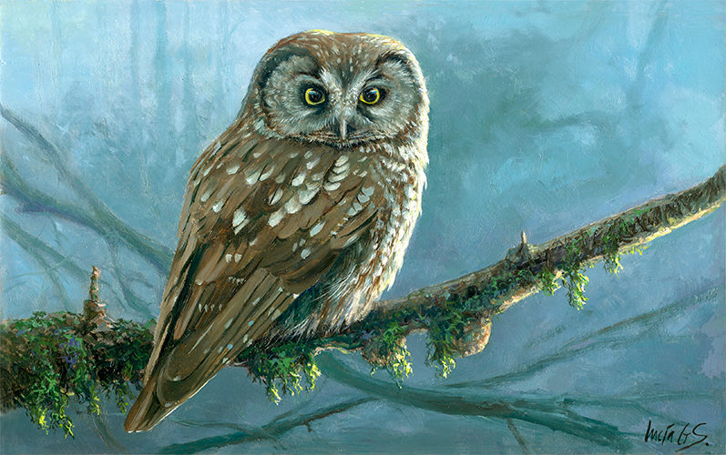 Mochuelo boreal / Tengmalm's owl / Aegolius funereus - Pintura al óleo sobre tabla de madera / Oil painting on wood - © Lucía Gómez Serra