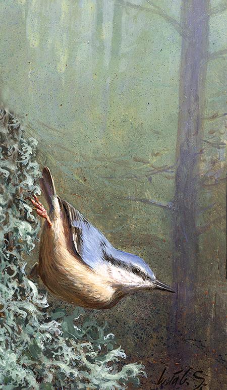 Trepador azul / Eurasian nuthatch / Sitta europaea - Acrílico sobre tabla de madera / Acrylic painting on wood - © Lucía Gómez Serra