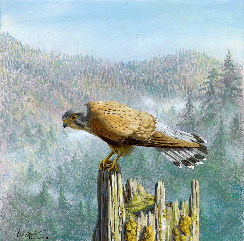 Cernícalo vulgar / Common kestrel / Falco tinnunculus - Acrílico sobre tela / Acrylic painting on canvas - 30,5 x 30,5 cm -© Lucía Gómez Serra