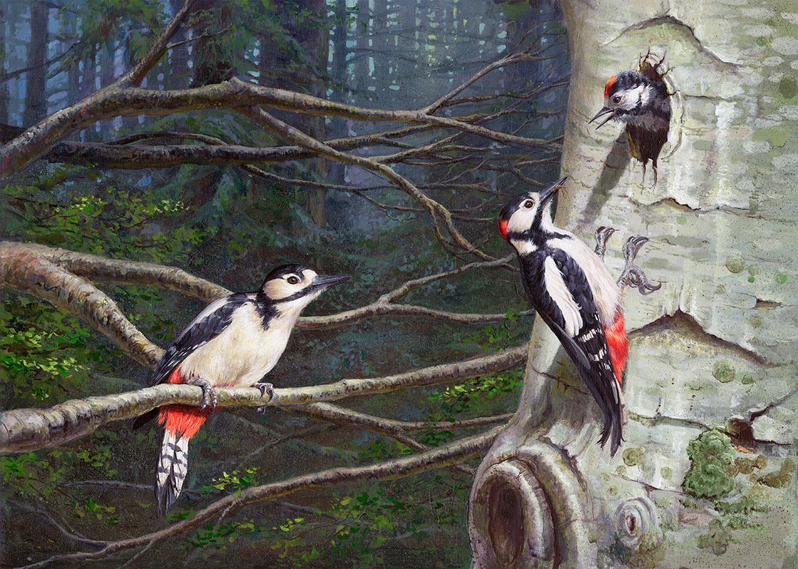 Pico picapinos / Great spotted woodpecker/ Dendrocopos major - Acrílico sobre tela / Acrylic painting on canvas - © Lucía Gómez Serra