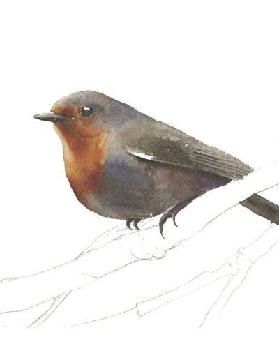 Petirrojo europeo / European robin / Erithacus rubecula - Acuarela / watercolour - © Lucía Gómez Serra