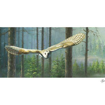 Lechuza común / Barn owl / Tyto alba – © Lucía Gómez Serra - Print