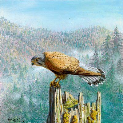 Cernícalo vulgar / Common kestrel / Falco tinnunculus – Acrílico sobre lienzo y bastidor 3D / Acrylic painting on canvas – 30,2 x 30,2 x 3,9 cm -© Lucía Gómez Serra