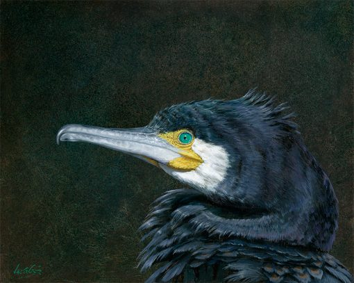 Cormorán grande / Great cormorant / Phalacrocorax carbo- Pintura al óleo sobre tabla de madera / Oil painting on wood – © Lucía Gómez Serra