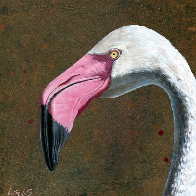 Flamenco común / Greater flamingo / Phoenicopterus roseus – Óleo sobre tabla de madera y bastidor 3D / Oil painting on wood – 30,2 x 30,2 x 3,8 cm -© Lucía Gómez Serra