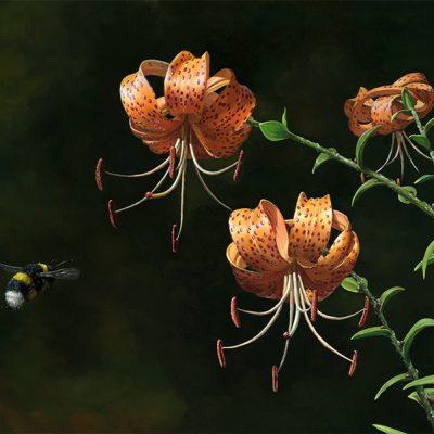 Azucena atigrada / Lilium lancifolium – Óleo sobre lienzo / Oil painting on canvas – 42 x 30 cm- © Lucía Gómez Serra
