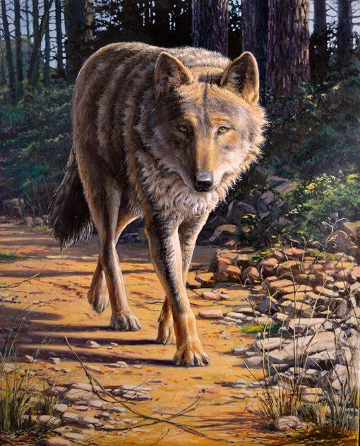 Lobo ibérico / Iberian wolf / canis lupus signatus – Óleo sobre lienzo / oil painting on canvas – © Lucía Gómez Serra
