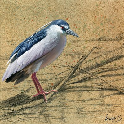 Martinete común / Night heron / Nycticorax nycticorax – Óleo sobre tabla de madera y bastidor 3D / Oil painting on wood – 30,2 x 30,2 x 3,8 cm -© Lucía Gómez Serra