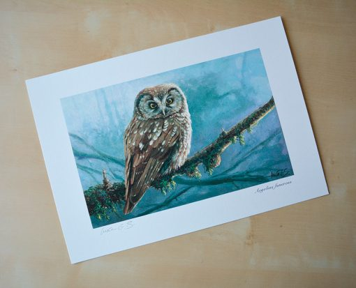 Mochuelo boreal / Tengmalm's owl / Aegolius funereus - © Lucía Gómez Serra - Print