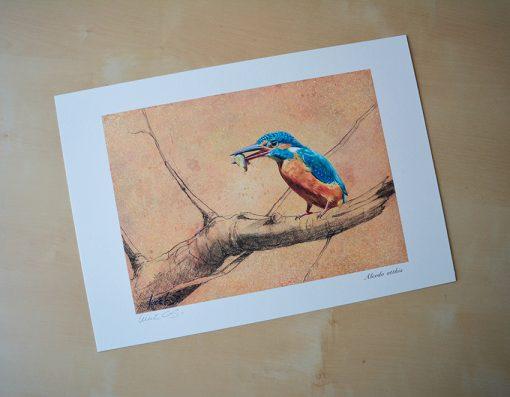 Alcedo atthis / Martín pescador común / Common kingfisher - © Lucía Gómez Serra - Print