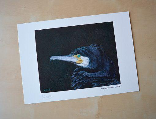 Cormorán grande / Great cormorant / Phalacrocorax carbo - © Lucía Gómez Serra - Print